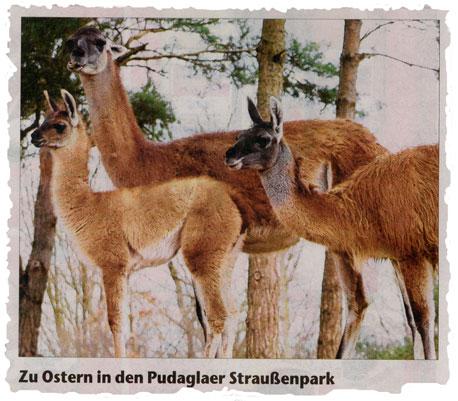 Straussenpark OZ