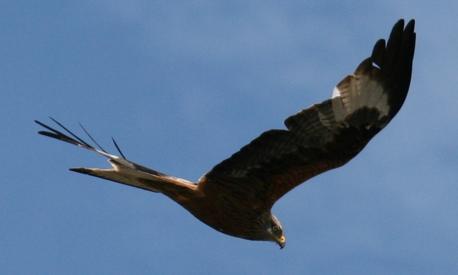 greifvogel-1-klein.jpg