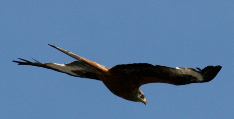 greifvogel-2-klein.jpg
