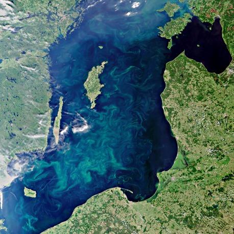 blaualgen-2010.jpg