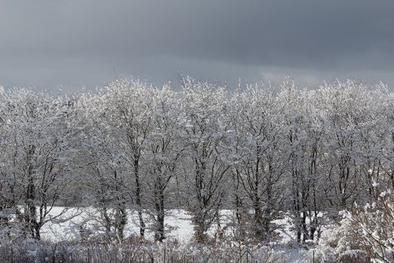 Usedomer Winterzauber